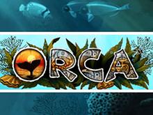Автоматы Orca на деньги