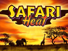 Safari Heat в Вулкане на деньги